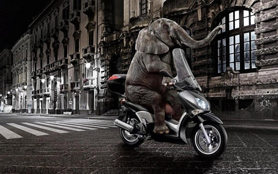 Elephant riding a motorcycle funny s